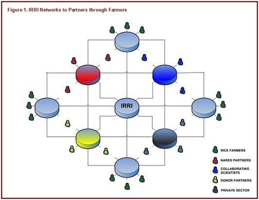 Figure 1: IRRI Networks to Partners through Farmers