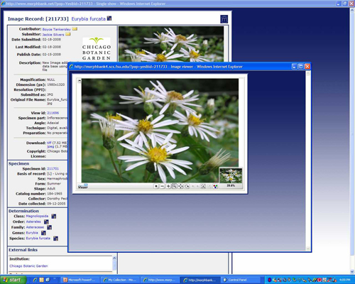 Figure 4: Information screen from Morphbank with thumbnail image enlarged