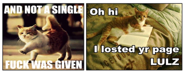 LOLCats adhering to the logic of lulz