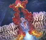 Platelet-stimulating Agent