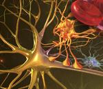 The Neurovascular Unit