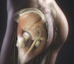 Gluteal Anatomy, Book Cover, The Art of Gluteal Shaping, Constantino Mendieta, MD