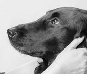 Caring Canine Calendar