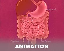 Educational Anatomy GIFs for Social Media