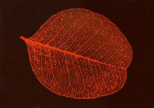 LeBeau_leaf.jpg