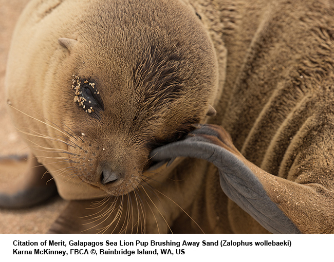 Galapagos-Sea-Lion-pup