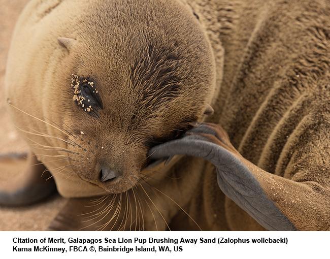 Galapagos-Sea-Lion-pup