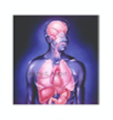 Primary Organs