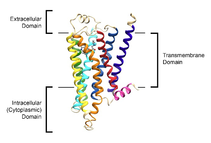 The Science Behind G Protein-Coupled Receptors (GPCRs) and