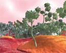 The Fungal Jungle