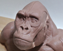 Gorilla Anatomy Écorché