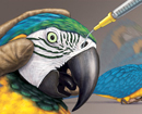 Macaw Anesthesia