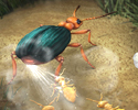 The Defense Mechanism of the Bombardier Beetle