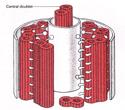 Structure of Cilium