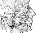Parotid Tumor Excision