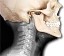 Introduction to Human Anatomy iBook