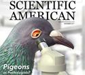 Pigeons as Pathologists?
