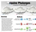Equine Phalanges: A Comparison of 3D Capture Methods