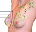 E-Guide for Physical Diagnosis - the Pelvic and Breast Exam